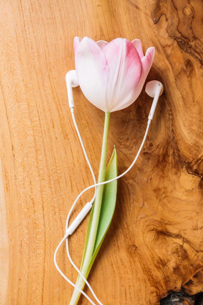 illustratie - tulp en oordopjes